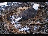 "DECORAH EAGLES  3/19/2014  9:23 AM  CDT   DAD ""TALKS"" TO MOM AT SWITCH"