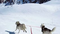 descente en yooner avec deux Huskies (26)