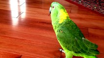 Owner films his parrot on the ground. What comes out of its beak at 0:09 is unbelievable!
