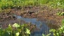 Asters : La conservation des zones humides est nécessaire