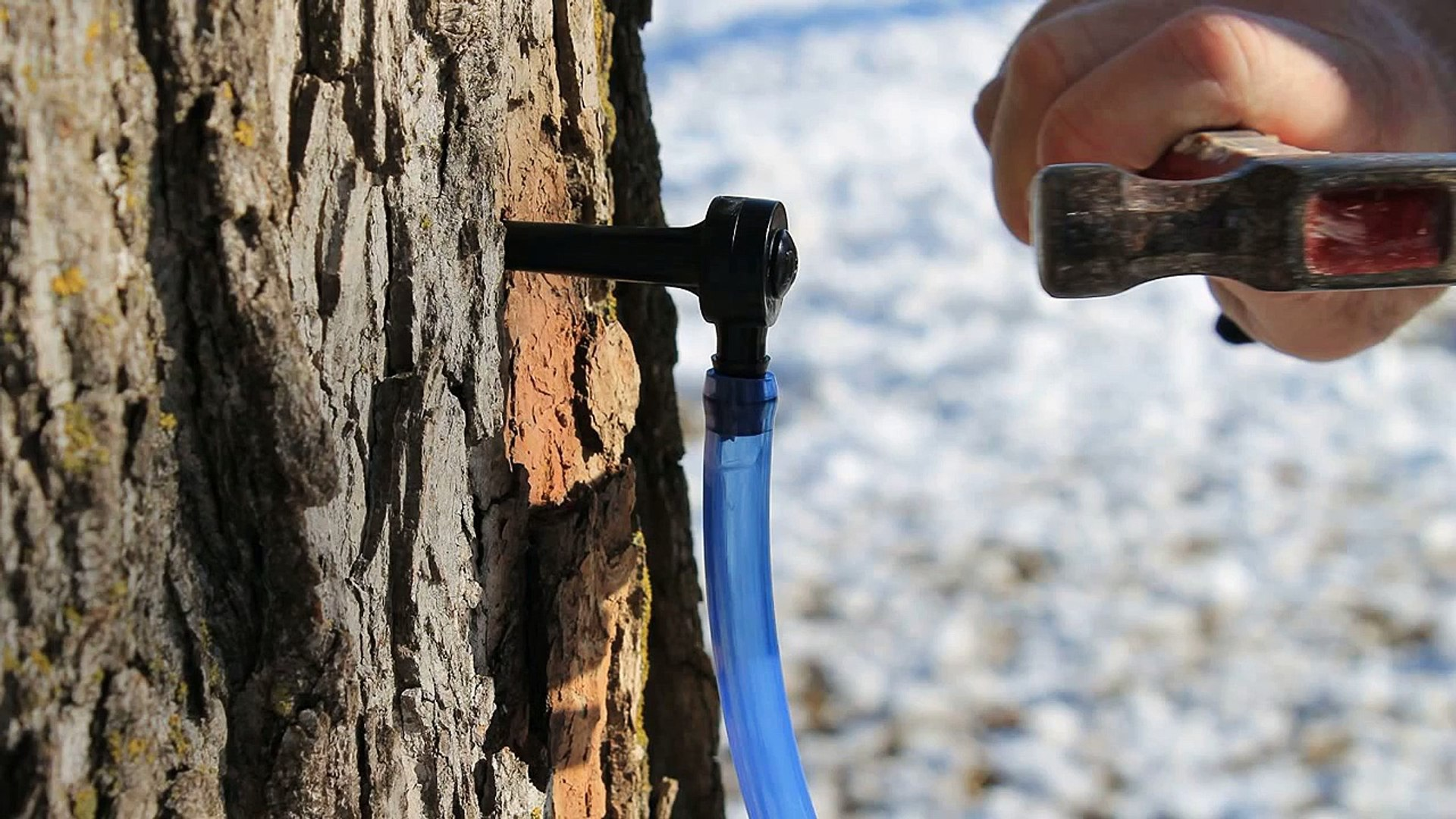 Maple Syrup Tapping Tree Saver Tap and Spile Kit Tap and 2 Foot Drop Line T