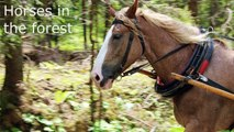 10 HORSE SOUNDS   Horses Neighing, Galloping and More HD Sound Effects
