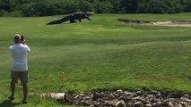 Un alligator géant se promène tranquillement sur un terrain de golf en Floride
