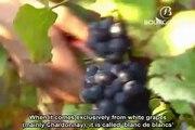 Crémant de Bourgogne tasting session - Bureau Interprofessionnel des Vins de Bourgogne (BIVB)