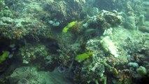 Paul's Reef, West Palm Beach, 12/28/12