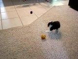 Ce tout petit chaton est effrayé par une balle, mais ce qu'il essaie de faire ensuite... C'EST TROP MIGNON!