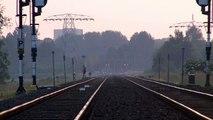 Koe aan de wandel langs spoor tussen Groningen en Waterhuizen - RTV Noord
