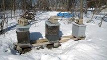 Bee Cleansing Flights 2-19-2014