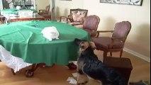 Les chats et les chiens... Ennemis jurés ou meilleurs amis