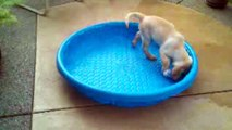 Labradors Are Awesome  Compilation