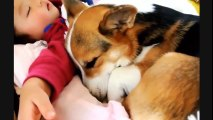 Cute Babies Laughing While Sleeping - Funny Dogs and Babies - Cute Dogs And Adorable Babies