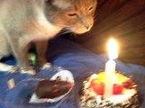 El Gato Abandonado Presenta Al gato Wall-e y su Hermano Feliz Cumpleaños