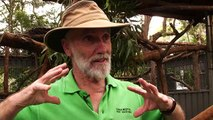 Australie: au chevet des koalas dans un hôpital pour marsupiaux