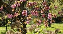 Secrets de Jardin en Essonne : 77 parcs et jardins à visiter