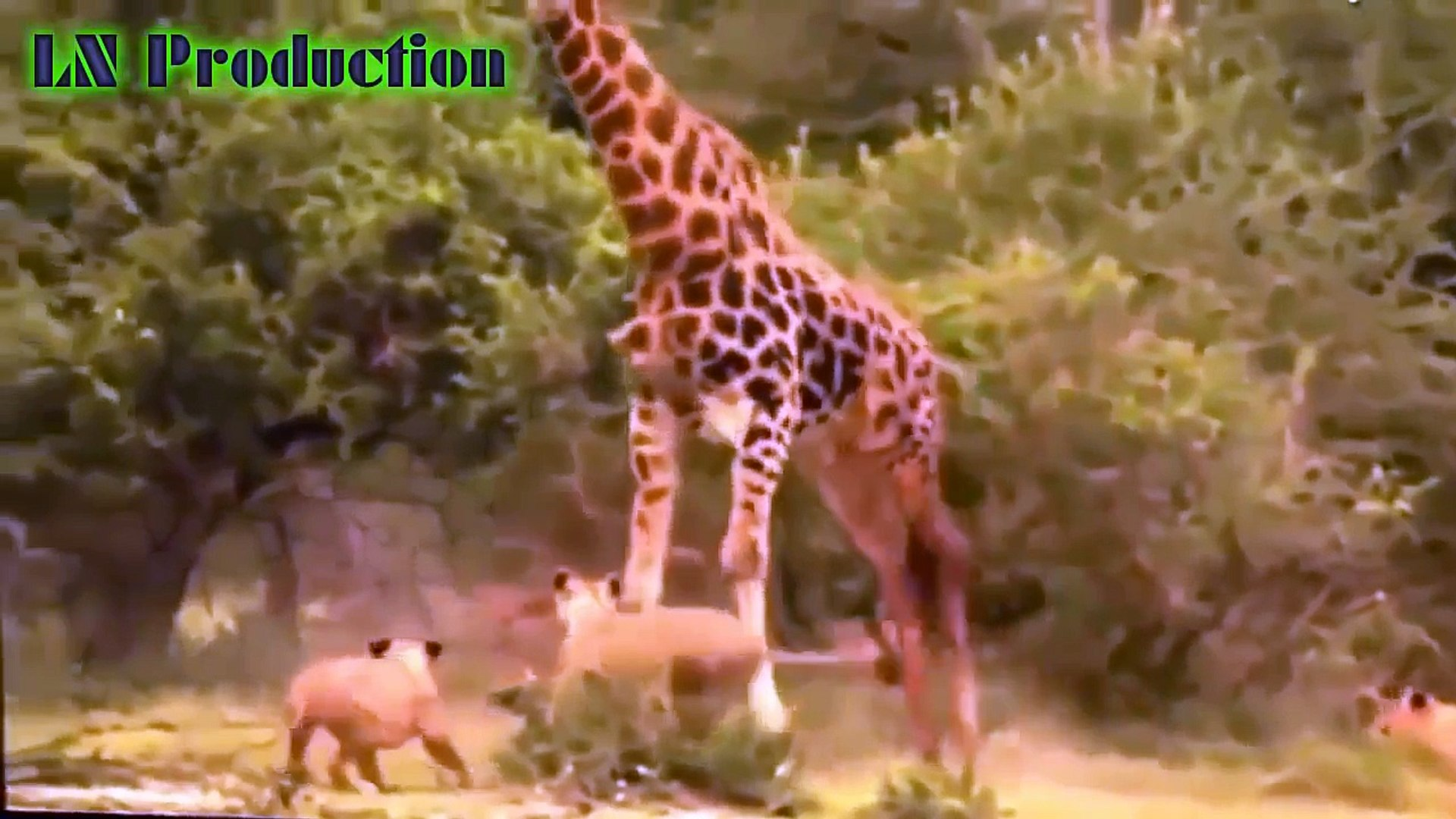 Biggest wild animal fights   CRAZIEST Animals Attack Caught   Crazy animal attack, animal fight #4