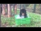 Rescued from a trafficker recently, bear cub enjoys bubble bath