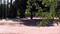 Lake Casitas campground─影片Dailymotion