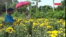 Người trồng hoa Sa Đéc không đủ hoa cung ứng dịp Tết Đoan ngọ