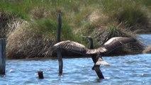 Ambiente, viaggio nel paradiso italiano degli uccelli migratori