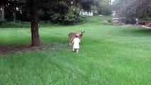 Une petite-fille rencontre un faon dans son jardin