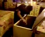 Chiclete com banana Camarote 27/10/2007