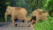 Cet éléphant dégage la route pour laisser passer sa famille !