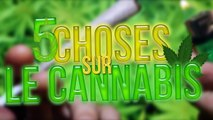 Le TOP 5 des choses que vous ne savez pas sur le Cannabis (Juin 2016) (FR)