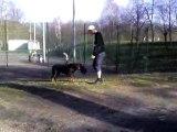 Achille mon chien