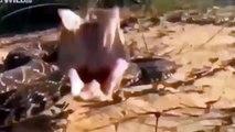 Most Shocking Animal Attacks On Human   Crazy Animal Attack People ! Wildlife Animal