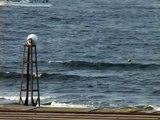 湘南波情報 2010年 8月25日(水)鵠沼 朝の波