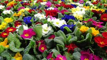 """""""Le printemps au jardin"""" du 20 au 23 mars 2015"""