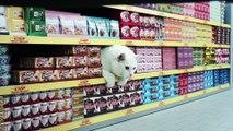 Netto met en scène des chats qui font leurs courses dans une pub hilarante