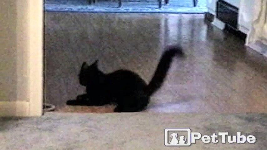 Black Cat Slips and Slides
