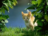 #Cute #Cats #videos of cute #kittens and #funny cat in kitten videos #Compilation(2)