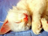 #Cute #Cats #videos of cute #kittens and #funny cat in kitten videos #Compilation(4)