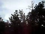 Tormenta aislada en Salto con lluvia viento N y granizo pequeño  (26/1/10)