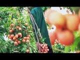 Cuộc sống nhà nông - Kênh 3N VTC16