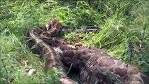 Amazing Wild Animal Attacks #1 Komodo Cobra Komodo vs Cobra