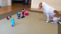 Dog vs. Robot Army  Cute Dog Maymo