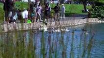 Pelicans 2012 07 07 19   Swans Palace pelican