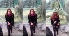 Tigre avança sobre mulher em zoológico mas esbarra contra vidro de proteção