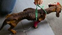 Valenton : deux chiens maltraités saisis chez leurs propriétaires