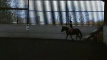 Horse transitions - walk, trot, canter & step back staying on a 20 metre circle.