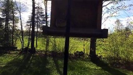 Adorable : pris sur le fait, cet écureuil recrache toutes ses graines