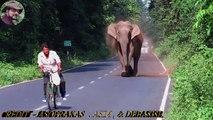Un gros éléphant bloque la route! Mais regardez bien ce qui apparaît à la droite de l'écran.