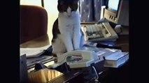 Des vidéos de chats marrants