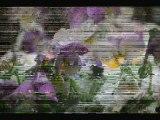 Neige & fleurs
