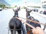 trot de 2 petits ânes