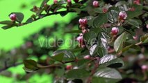 Green Branch With Unopened Flower Bud Green Plants Bushes Grass Leaves Flowers Branches of Trees on