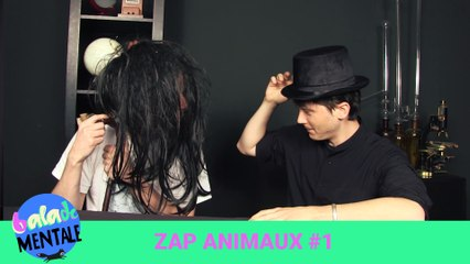 Zap animaux #1 + annonce FAQ